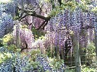 ashikaga_flower_02.jpg